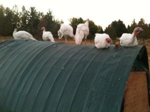 Farm pics 033