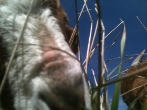 Farm 2013 048